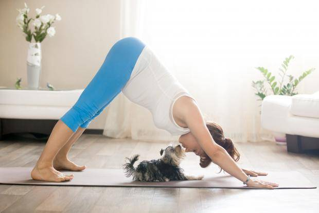 Дога-йога: я и моя собака