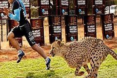 Регбист против гепарда, и еще 4 сражения человека и природы (видео)