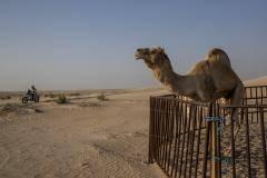 Хоть в Африке, хоть в Америке, хоть в Аравии