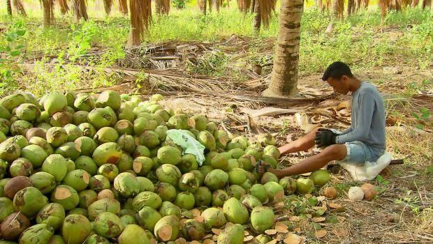 Жуй кокосы, ешь бананы