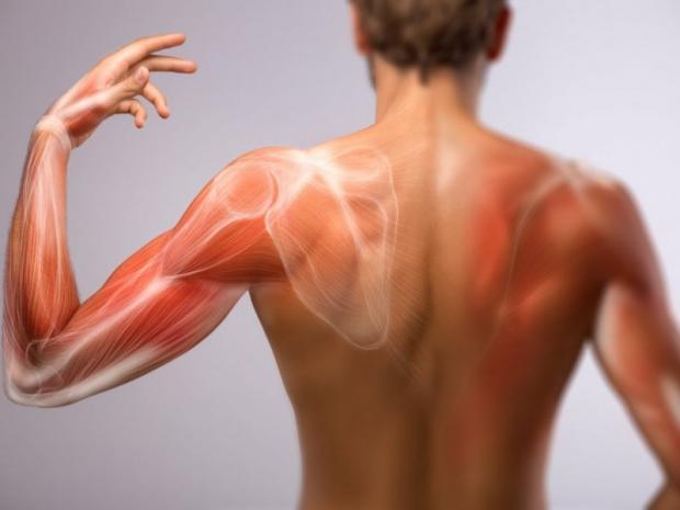 6 причин, по которым ваши плечи болят при тренировке груди